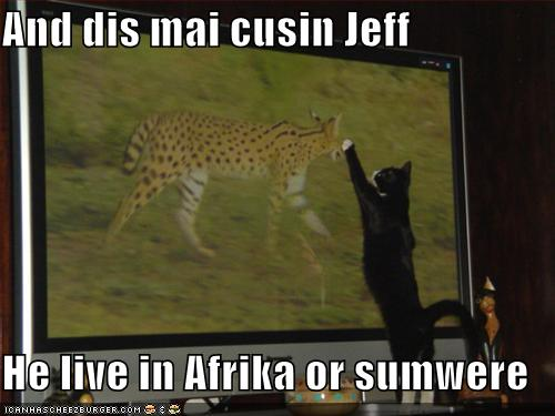 funny-pictures-cat-introduces-his-cousin-jeff